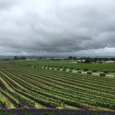 View of Carneros from Gloria Ferrer in Sonoma, California