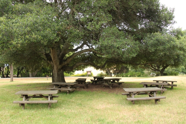 Picnic areas are located in front of Burdell Mansion and across from the adobe. No dogs are allowed in the park.