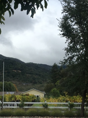 View from Cafe Citti, Kenwood, California
