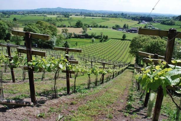 Fenny Castle Vineyards
