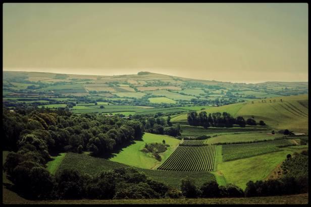 Vineyards of Bride Valley in Dorset, England