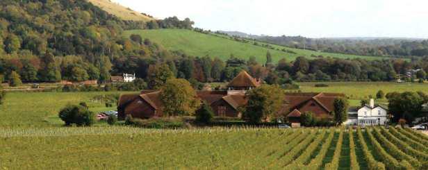 Denbies Wine Estate in Dorking, England