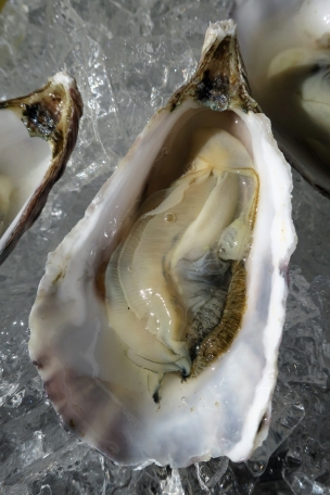 Freshly shucked Hog Island oyster